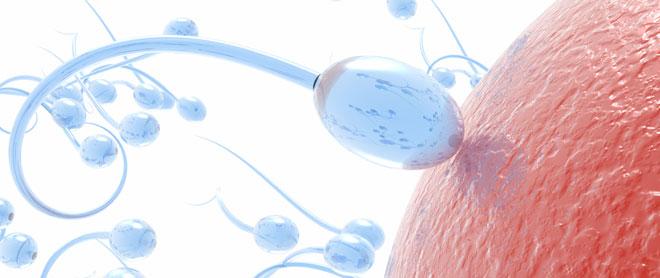 Méthode Billings pour identifier les jours fertiles